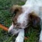 Profile picture of Riley
