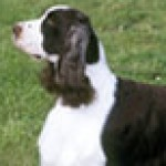 Group logo of English Springer Spaniel