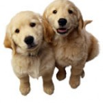 Group logo of Puppy Play!